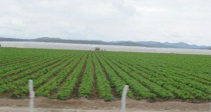 Iniciará en 2015, planta tratadora de chiles en la delegación de Bocas