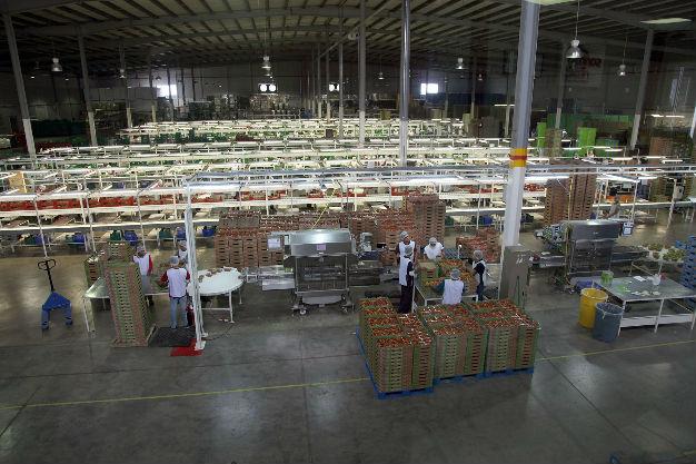A Japón, tomate potosino de Santa Rita