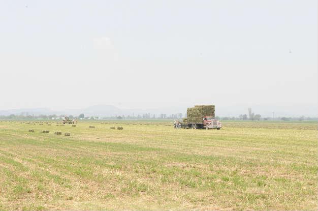 Informan en Bocas sobre créditos para el campo